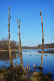 Árvores inoperantes no lago Imagens de Stock