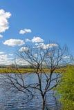 Árvores inoperantes no lago Foto de Stock Royalty Free