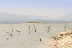 Árvores inoperantes no lago Imagem de Stock