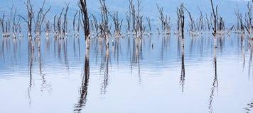 Árvores inoperantes no lago inundado Imagens de Stock