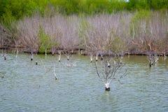 Árvores inoperantes no lago inundado para um fundo Phetchaburi, Tailândia Fotografia de Stock