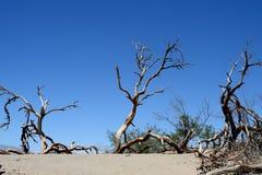Árvores inoperantes no parque nacional de Vale da Morte, Califórnia Fotos de Stock