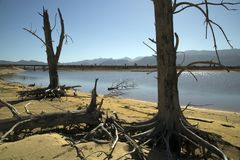 Árvores inoperantes no reservatório seco imagem de stock