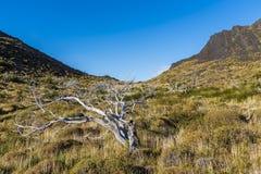 Árvores inoperantes secas no pampas foto de stock