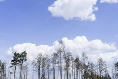 Árvores inoperantes velhas Imagens de Stock