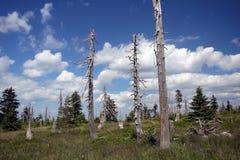 Árvores inoperantes velhas e céu azul fotos de stock royalty free