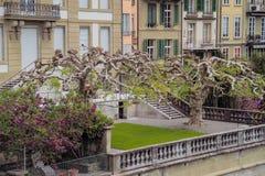 Árvores interessantes na jarda da casa Fotos de Stock