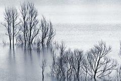 Árvores inundadas Fotografia de Stock