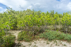 Árvores inundadas na província de Phetchaburi da floresta dos manguezais tailândia Imagens de Stock