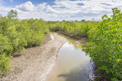 Árvores inundadas na província de Phetchaburi da floresta dos manguezais tailândia Fotos de Stock Royalty Free