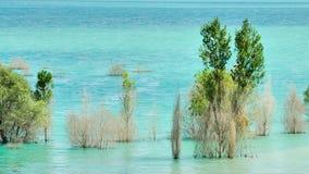 Árvores inundadas no.1 Imagem de Stock Royalty Free