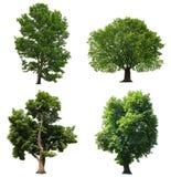 Árvores isoladas Fotografia de Stock Royalty Free