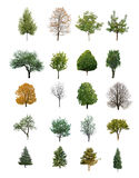 Árvores isoladas Foto de Stock Royalty Free
