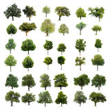 Árvores isoladas Imagens de Stock