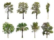 Árvores isoladas da coleção no fundo branco Fotografia de Stock Royalty Free