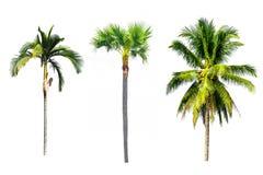 Árvores isoladas em um fundo branco Imagens de Stock Royalty Free