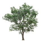 Árvores isoladas no fundo branco Imagens de Stock Royalty Free