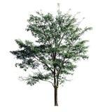 Árvores isoladas no fundo branco Foto de Stock
