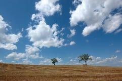 Árvores isoladas sobre um monte macio na área do Chianti imagens de stock royalty free