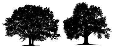 Árvores isoleted ilustração stock