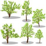 Árvores isométricas do vetor e arbustos decorativos Fotos de Stock