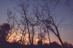 Árvores Leafless com fundo do céu azul fotografia de stock