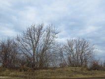 Árvores leafless desencapadas e céu azul com nuvens brancas Landskape adiantado da opinião da mola do inverno natural do outono imagem de stock royalty free