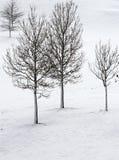 Árvores Leafless do inverno na neve foto de stock