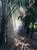 Árvores, luz, fumo, névoa, natureza Imagens de Stock Royalty Free