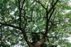 Árvores luz solar de madeira verde da natureza Imagem de Stock Royalty Free