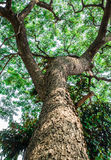 Árvores luz solar de madeira verde da natureza Fotos de Stock