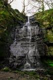 Árvores máximas do inverno da cachoeira do distrito Imagem de Stock Royalty Free