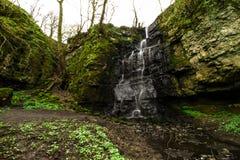 Árvores máximas do inverno da cachoeira do distrito Imagem de Stock