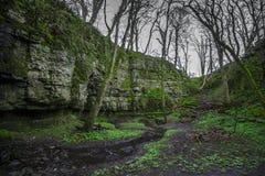 Árvores máximas do inverno do pântano do distrito Imagens de Stock Royalty Free