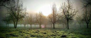 Árvores místicos Imagens de Stock Royalty Free