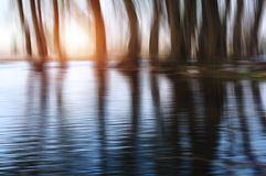 Árvores místicos Ajardine com as árvores, refletindo na água foto de stock royalty free