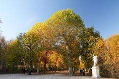 Árvores Manicured imagem de stock