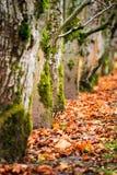 Árvores mergulhadas Foto de Stock