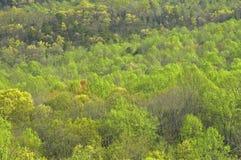 Árvores, mola adiantada Foto de Stock