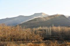 Árvores, montanhas e gramas na luz solar da tarde do outono Fotos de Stock Royalty Free