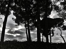 Árvores mostradas em silhueta Imagens de Stock