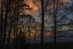 Árvores mostradas em silhueta, céu colorido Imagens de Stock