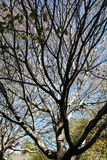 Árvores mostradas em silhueta com algumas folhas Fotografia de Stock