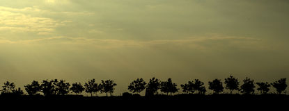 árvores mostradas em silhueta contra o céu Imagens de Stock Royalty Free