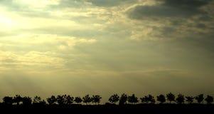 árvores mostradas em silhueta contra o céu Foto de Stock Royalty Free