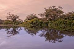 Árvores mostradas em silhueta contra um céu alaranjado no por do sol Fotografia de Stock Royalty Free