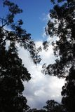 Árvores mostradas em silhueta contra um céu azul Foto de Stock