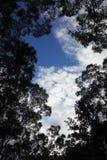 Árvores mostradas em silhueta contra um céu azul Fotografia de Stock Royalty Free