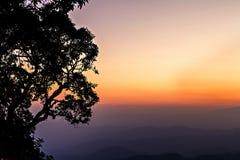 Árvores mostradas em silhueta e skyline Fotos de Stock Royalty Free