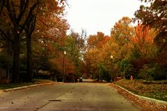 Árvores multicoloridos brilhantes da queda que fundem através de uma rua da vizinhança na hora dourada imagens de stock royalty free